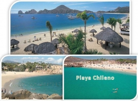 Chileno Baja california